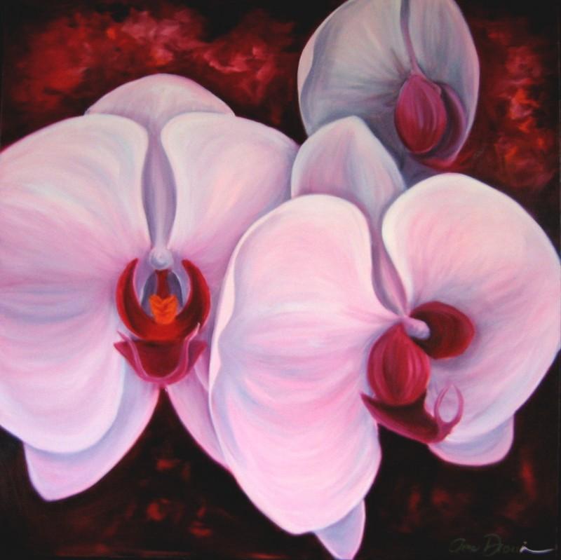 Orchidées de dame