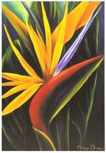 carte - Floraison magique